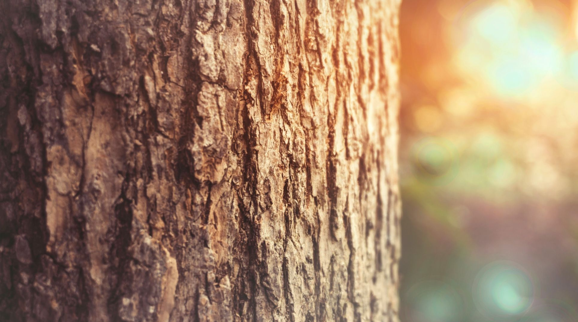 up close photo of tree in forest